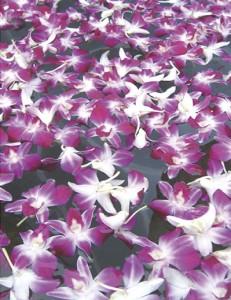 洋蘭フラワーバスイメージ